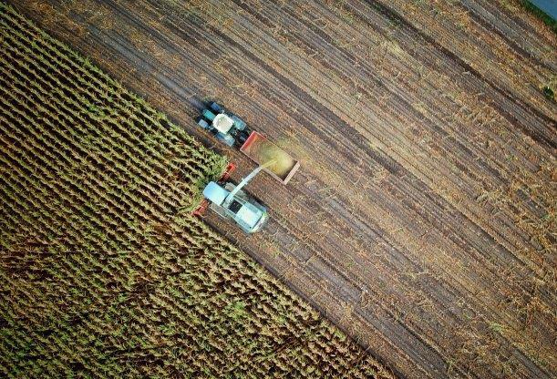Jordbruksmark som skördas. Foto.