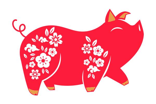 255 pig