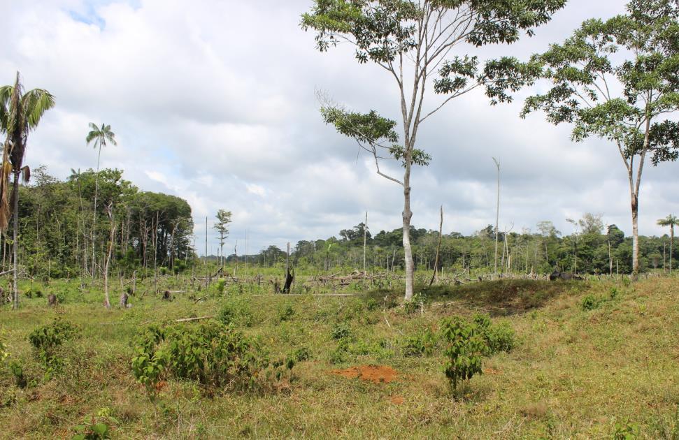 Ett område i Vaupés i den colombianska delen av Amazonas som har blivit avverkat. Bild: Torsten Krause.