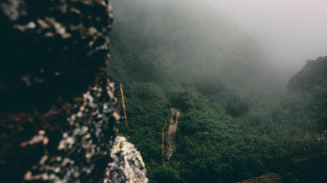 Människor som går på en stig i regnskogen i Machu Picchu, Peru. Bild: Unsplash.
