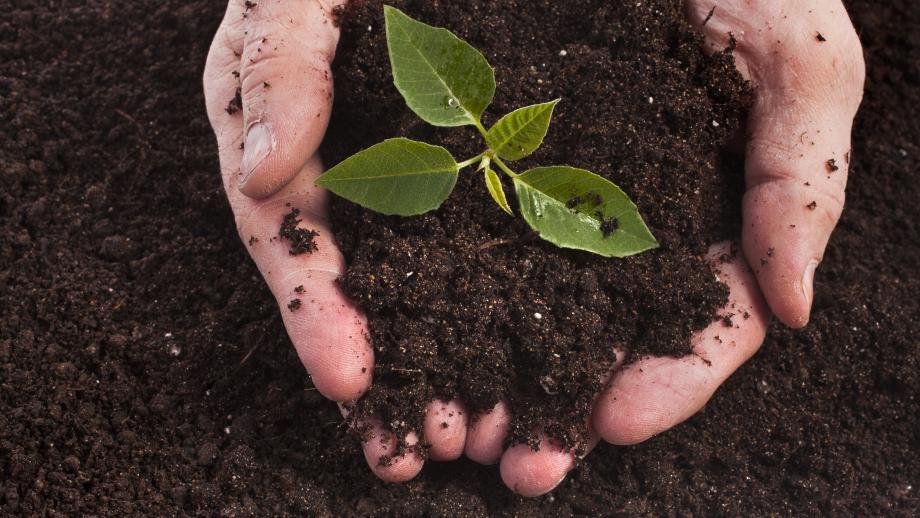 Händer som håller i jord. Foto.