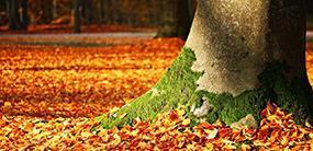 2773 Task36 fall foliage 285x170