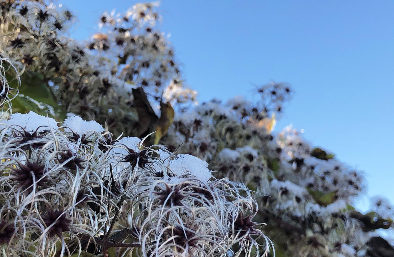 Photo of snowy garden.