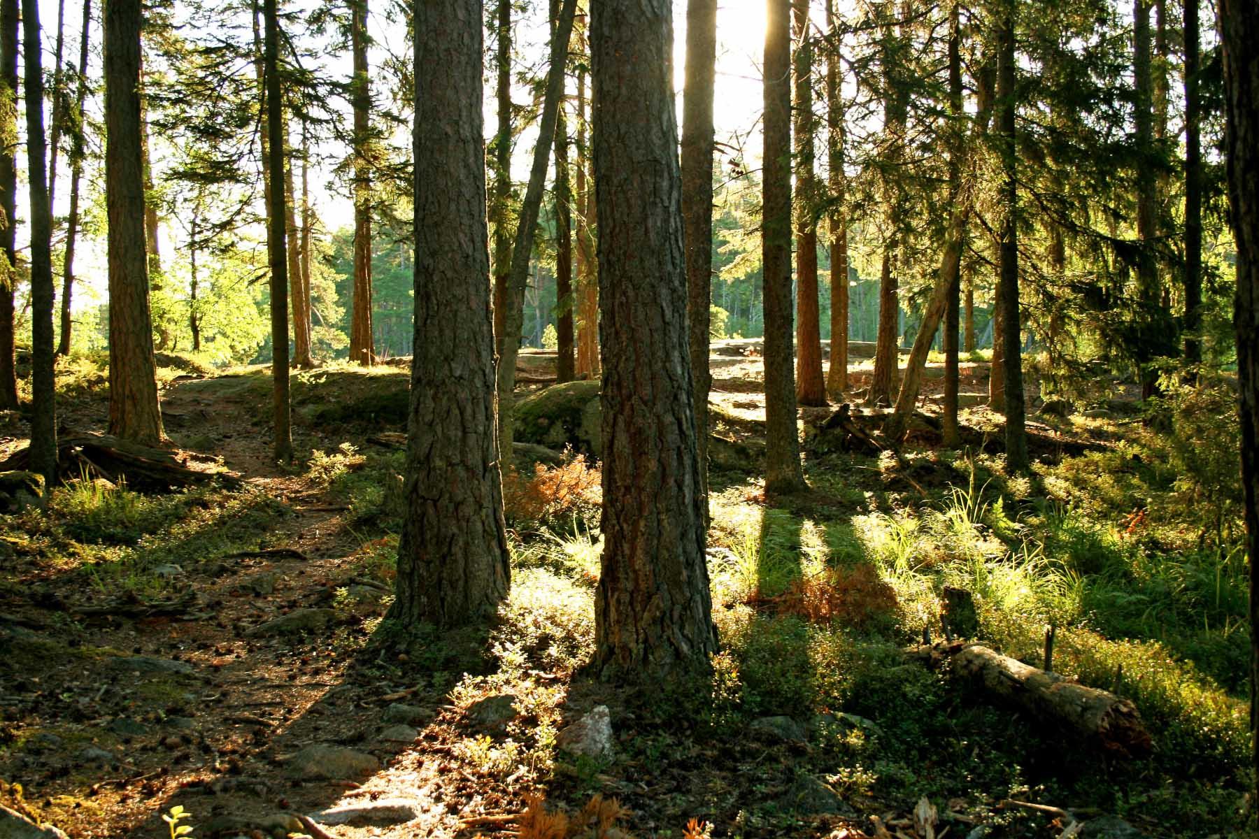 202 skog