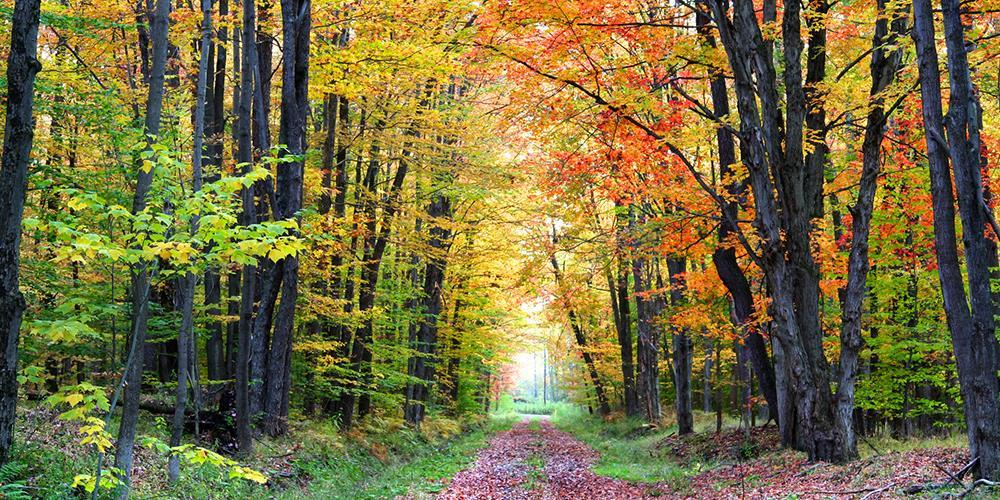 Stig genom höstskog