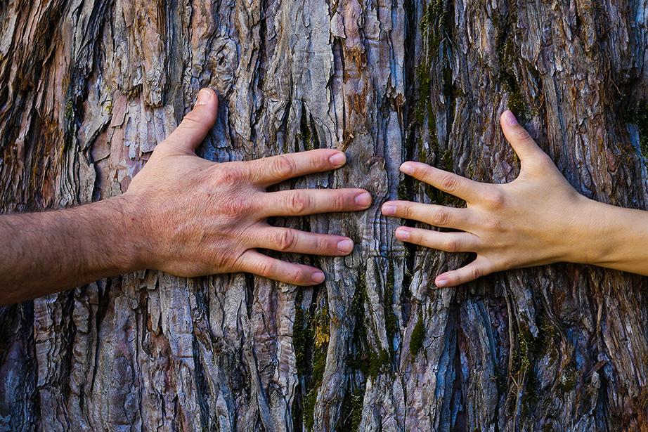 Två händer håller på barken på ett träd