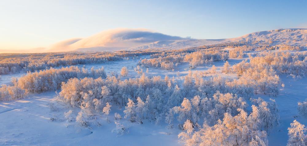 11955 Frostig morgon