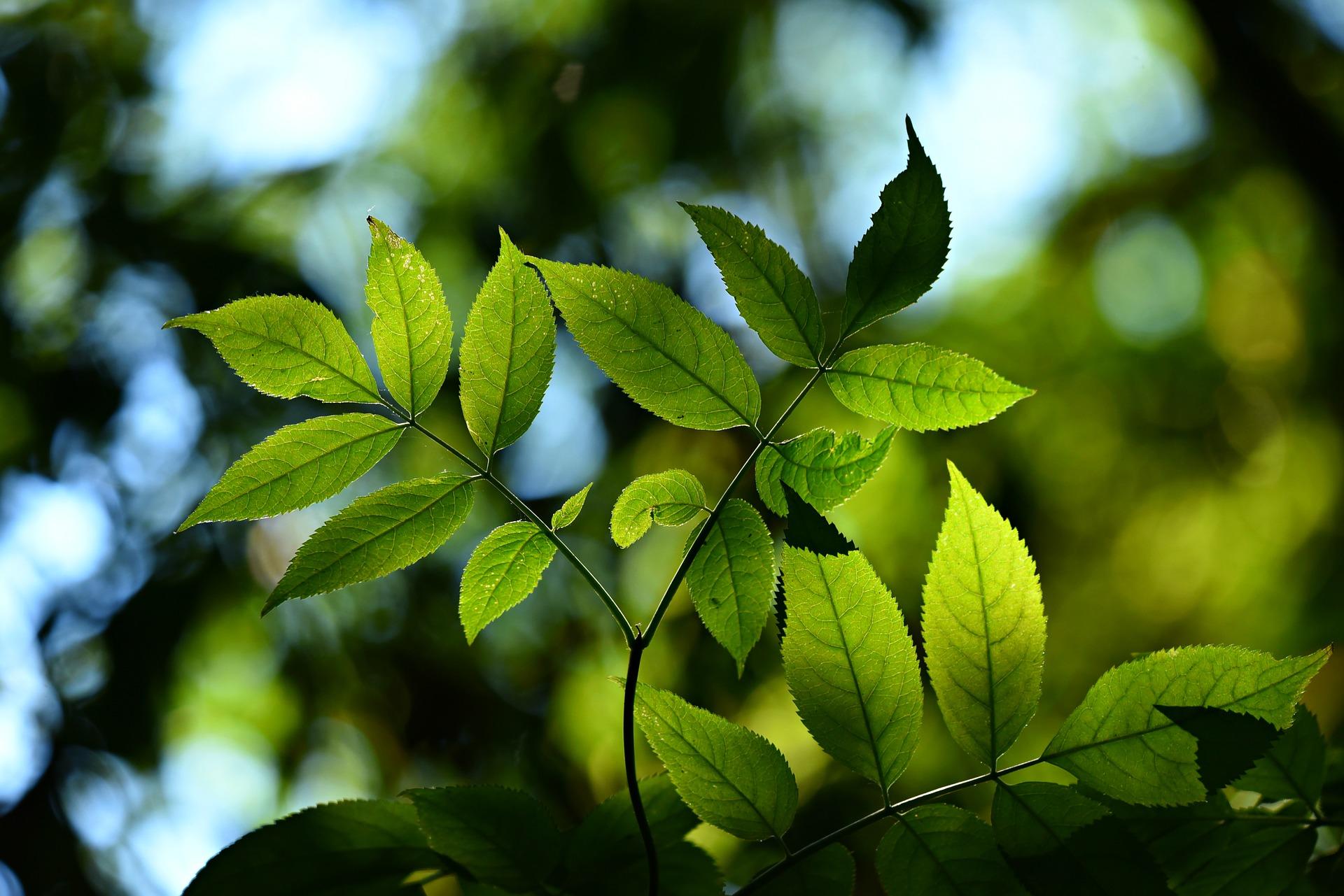 6837 leaves 3616892 1920