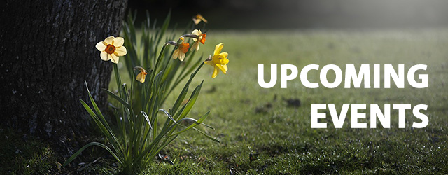 8443 daffodils 455359 1280 newsletter